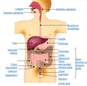 organes 2